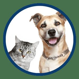 Κτηνίατροι